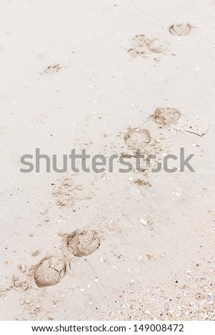 Close up horse shoes tracks on the beach - stock photo