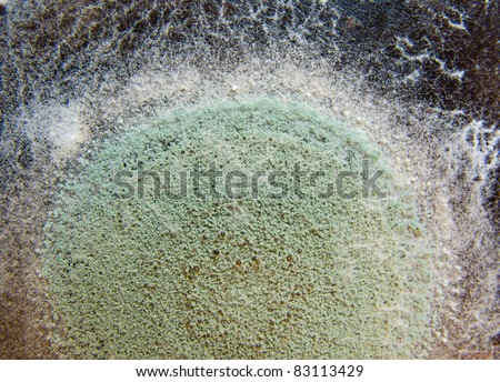 Close-up image of a mold - stock photo
