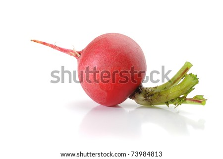 Close-up image of a radish studio isolated on white background
