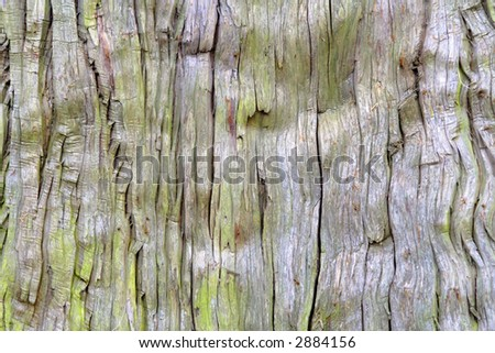 Close-up image of a very old bark tree.