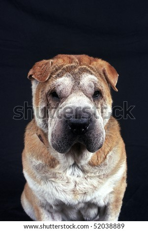 Close-up image of an old brown and in front of a black background. - stock photo