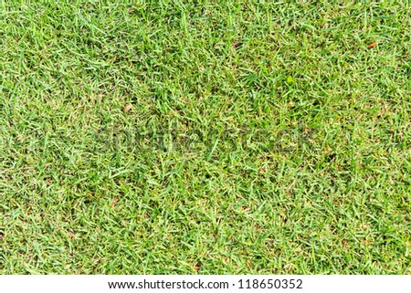 Close-up image of fresh spring green grass. - stock photo