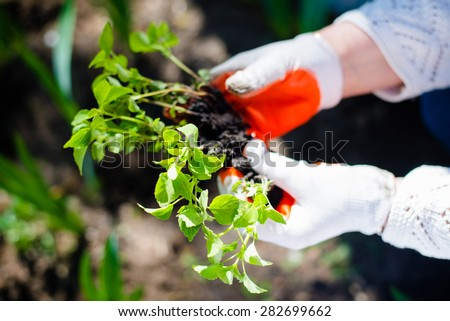 Close up image of hands in gloves holding green plant - stock photo