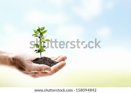 Close up image of human hands holding sprout