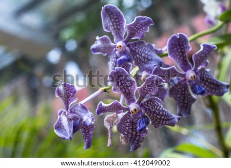 close up image of orchid
