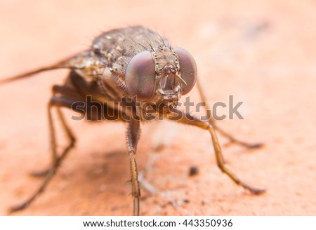 close up insect fly