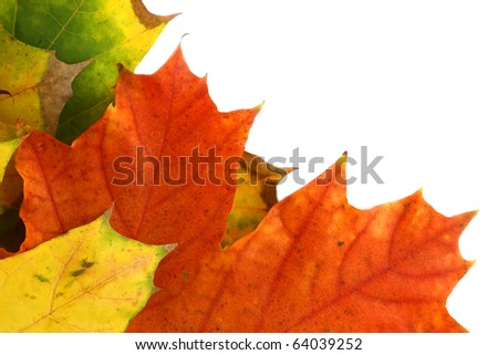 close-up isolated autumn leaves border