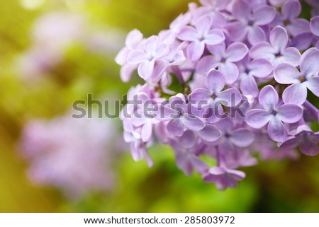 Close up look at purple flower - stock photo