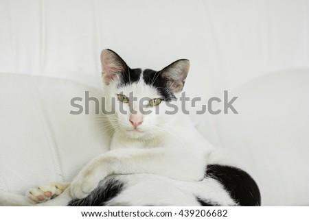 Close up lovely cat on sofa,cat on a sofa, sleeping cat face close up, small sleepy lazy cat, lazy cat on day time, sleepy cat close up. - stock photo