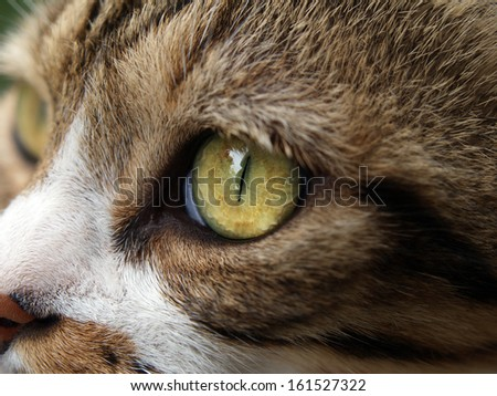 Close-up macro of a cat's eye and face. - stock photo
