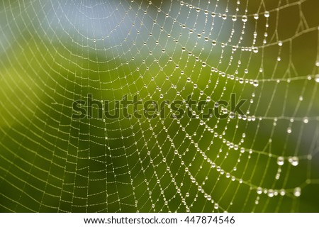 Close Up Macro of a Spider Web with Fresh Dew Drops in the Morning - stock photo