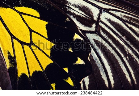 Close up macro of butterfly wings.  - stock photo