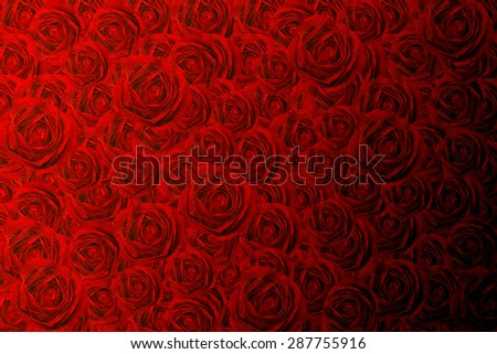 close up macro shot of a red rose