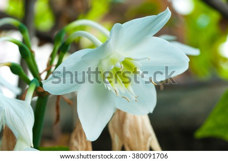 Close up, macro white flower in forest with colorful background in morning sunlight - stock photo