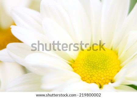 Close up macro white flower with yellow pollen - stock photo