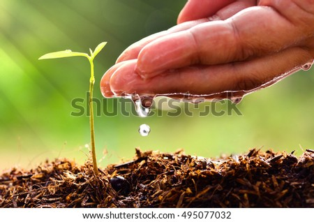 Close up male hand watering young tree with sun light