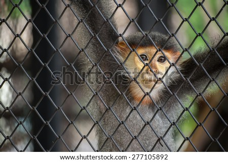 close up monkey in zoo - stock photo
