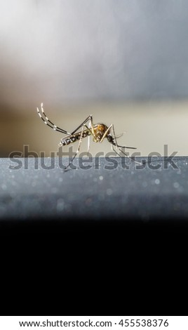 Close up Mosquito on a black background dirty. - stock photo