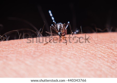 Close up mosquito sucking blood on human skin,Mosquito is carrier of Malaria