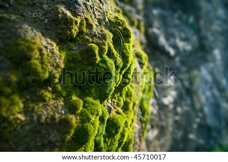 close-up moss in the forest - stock photo