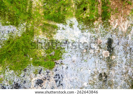close up moss on cement background