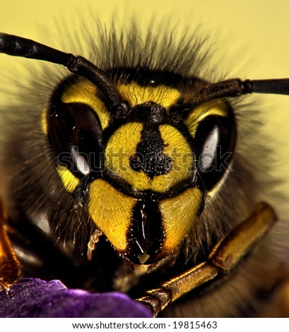 Close up of a bee - stock photo