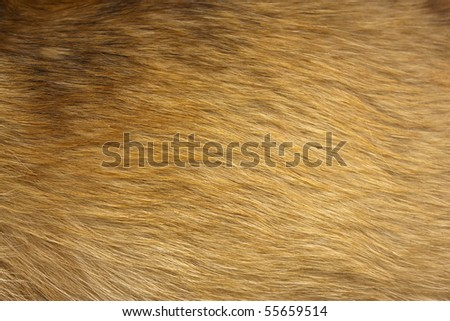 Close up of a beige dog fur.