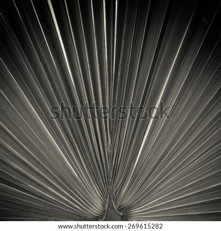 Close up of a big leaf with symmetrical veins. Artistic image. - stock photo