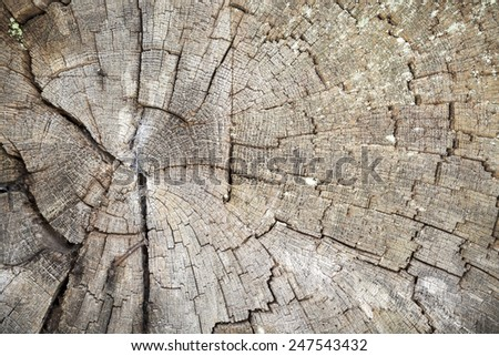 close up of a big old tree pit - stock photo