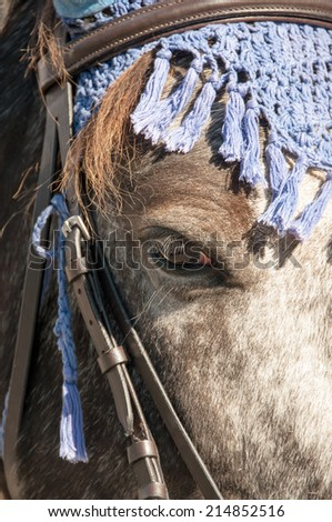 Close up of a black and white horse. - stock photo