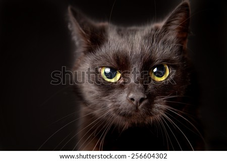 Close-up of a black cat, looking at camera, isolated on black - stock photo