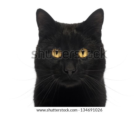 Close-up of a Black Cat looking at the camera, isolated on white - stock photo