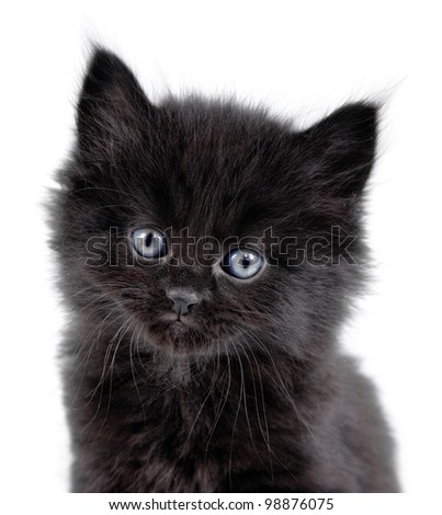 close-up of a black little kitten sitting down on a white background