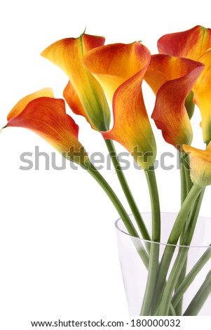 Close-up of a bouquet of calla lilies in a glass vase. Isolated on white background - stock photo