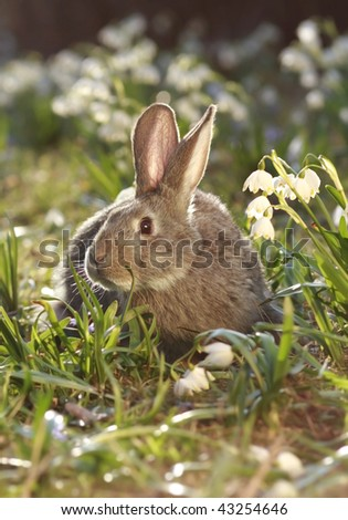 close-up of a brown hare feeding in meadow
