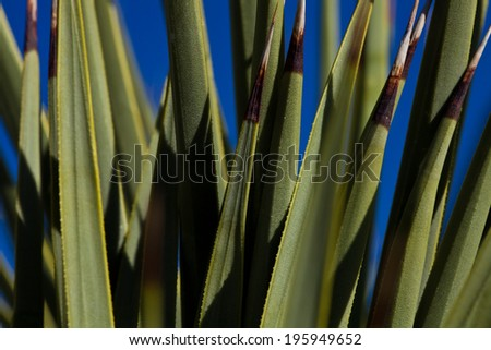 Close up of a cactus plant - stock photo