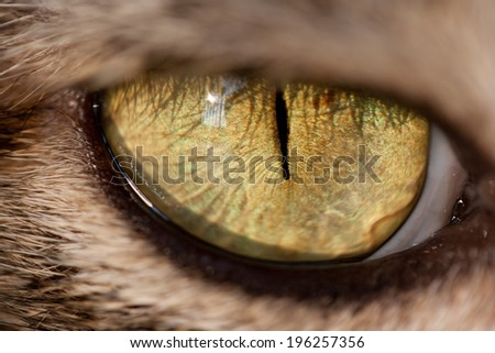 close up of a cat eye - stock photo