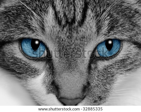 Close-up of a cat's face with selective coloring of her bright blue eyes.