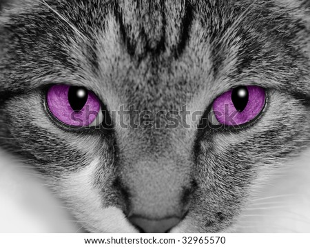 Close-up of a cat's face with selective coloring of her bright purple eyes. - stock photo