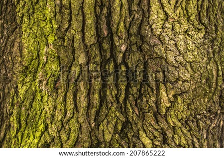 Close up of a cortex tree - stock photo