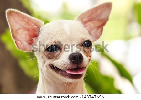 Close up of a cute little dog - stock photo