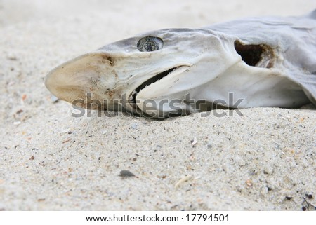Close up of a dead shark on the beach
