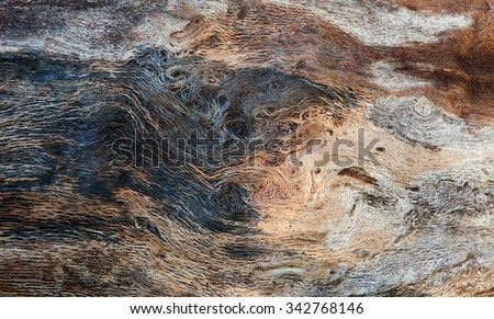 Close up of a dead tree for background - stock photo