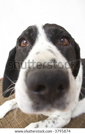Close-up of a dog. - stock photo