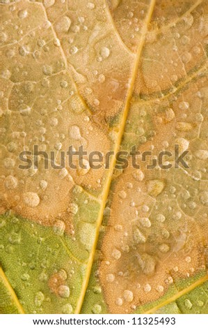 Close-up of a fallen, autumn maple leaf with raindrops showing a pattern and revealing textures