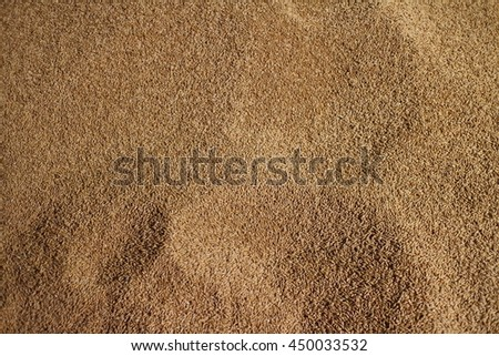 close-up of a field of wheat grains