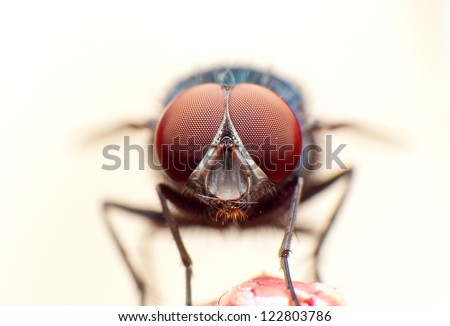 close up of a fly - stock photo