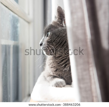 Close up of a Gray Cat Relaxing on Cat Tree by Window - stock photo