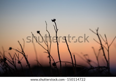 Close up of a greek plant . More than 6,000 plant species have been recorded, of which 700-750 are original that is they can be found only within the boundaries of the Greek land. - stock photo