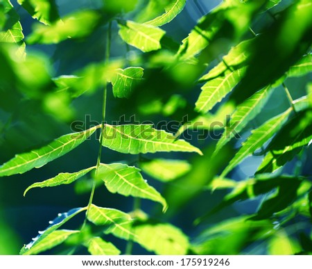 Close up of a Green leaf - stock photo